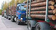 Rekkoja puutavaralastissa