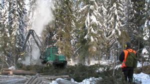 Metsäteho Oy 1996–2015. Mitä yhtiöittäminen toi tullessaan?