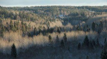 Näyttöön perustuva metsätalous -hanke syventyy metsätalouden kestävyyskysymyksiin
