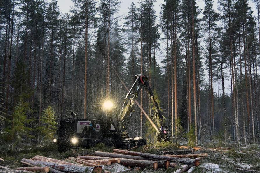 Metsäkone metsässä katkomassa puita.