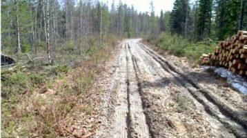 Kausivaihtelusta puun toimitusketjuille yli 70 miljoonan euron vuosittaiset lisäkustannukset