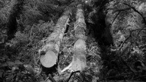 Wood measuring methods used in 2017