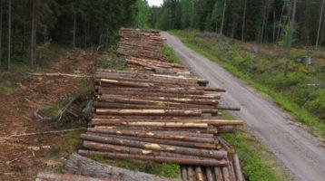 Energiatehokas puunkorjuu ja autokuljetus